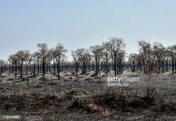 TOPSHOT An area afected by forest fires is seen in Otuquis National Park in the Pantanal ecoregion of Bolivia southeast of the Amazon basin on August...