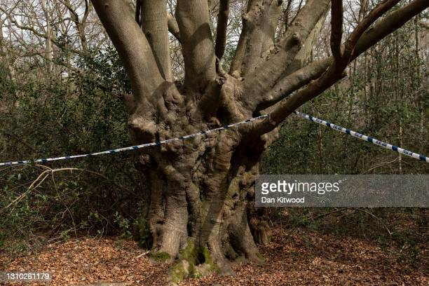 An area is cordoned off as police search teams work their way through woodland in Epping Forest on April 01, 2021 in Epping, England. Richard...