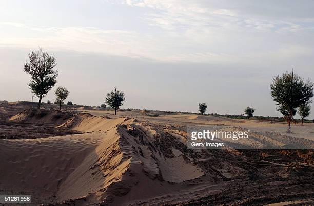 An area of the Gobi desert that's under afforestation to prevent sand movement is seen September 4 2004 Yinchuan China In order to stop continuous...