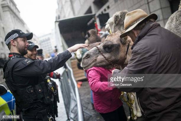 An armed police officer greets a camel before the animal marches in the Lord Mayor's Show on November 11 2017 in London England The Lord Mayor's Show...