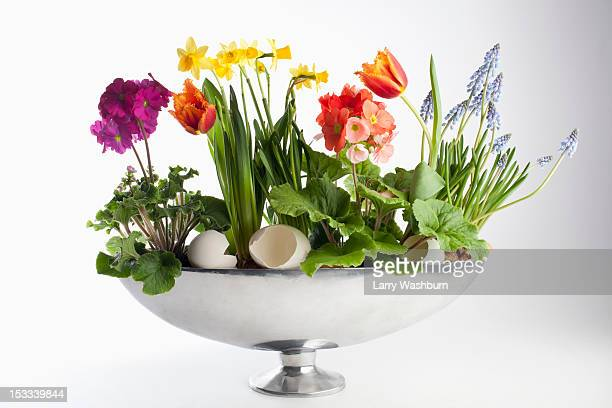 An arrangement of spring flowers, including daffodils and tulips