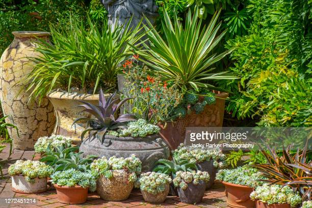 an arrangement of terracotta pots in an english garden, planted with succulent plants - garden stock pictures, royalty-free photos & images