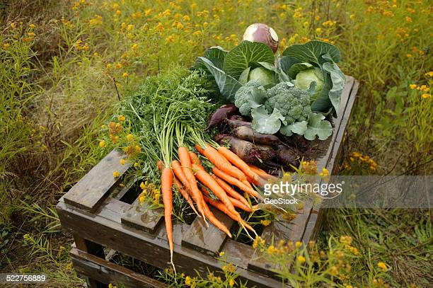 An array of freshly picked vegetables