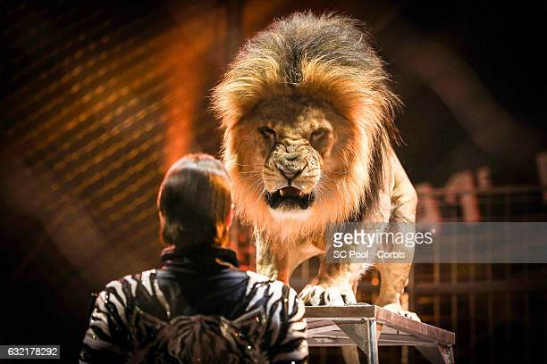 An Artist with a Lion performs during the 41th MonteCarlo International Circus Festival on January 19 2017 in MonteCarlo Monaco