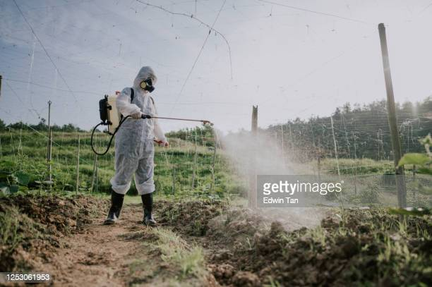 an asian chinese female farmer with protective suit spraying on bitter groud plants in the farm for disinfection - glyphosate stock pictures, royalty-free photos & images