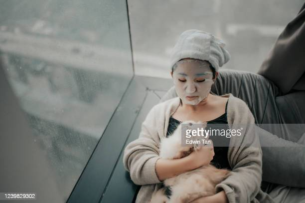 an asian chinese teenager girl  doing face spa mask with her cat in bedroom - vertebrate stock pictures, royalty-free photos & images