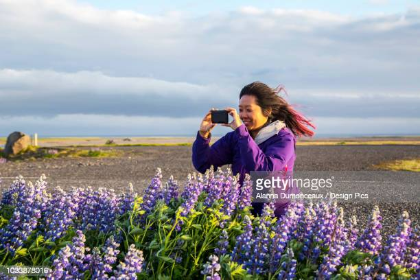 An asian female traveller takes pictures of the lupine flowers on a very windy day