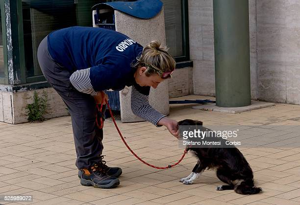 An assistant tends to a dog in the municipal kennel Muratella on April 27 2016 in Rome Italy The Canile Comunale Della Muratella hosts about 1600...