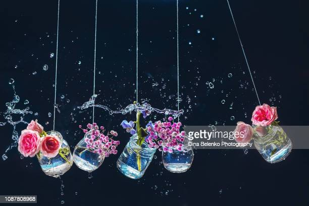 an assortment of flowers in a pendulum of newton's cradle. jars and bottles with roses on a dark background with water drops and splashes. - physics imagens e fotografias de stock