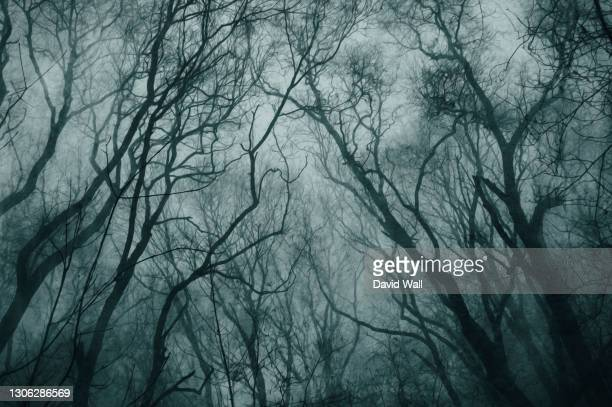 an atmospheric, moody concept. looking up at a spooky forest of a trees on a foggy day. with a grunge, textured edit. - landscape scenery stock pictures, royalty-free photos & images