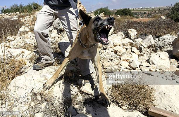 An attack dog barks during a training exercise in the Kiryat Arba settlement West Bank on Tuesday Sept 20 2011 'The army does a wonderful job but...