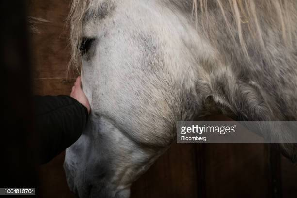 An attendee pets a horse at the equine pavilion during La Exposicion Rural agricultural and livestock show in the Palermo neighborhood of Buenos...