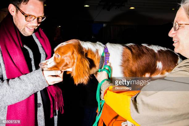 An attendee pets an Irish Red Setter dog during the annual Meet the Breed event ahead of the 141st Westminster Kennel Club Dog Show in New York US on...