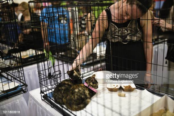 An attendee seen in the adoption center at CatCon Worldwide 2018 at Pasadena Convention Center on August 5 2018 in Pasadena California