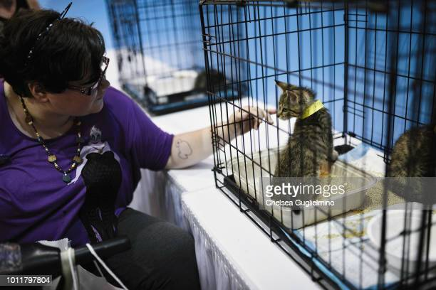 An attendee seen in the cat adoption center at CatCon Worldwide 2018 at Pasadena Convention Center on August 5 2018 in Pasadena California
