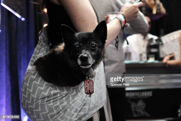 An attendee to Bar Convent Brooklyn an international bar and beverage trade show at the Brooklyn Expo Center holds her dog while tasting different...