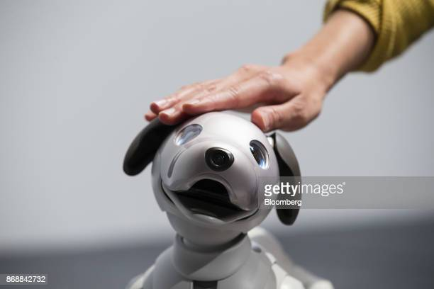 An attendee touches one of Sony Corp's new robotic dogs which the company is marketing as 'aibo' instead of the prior 'AIBO' during a news conference...