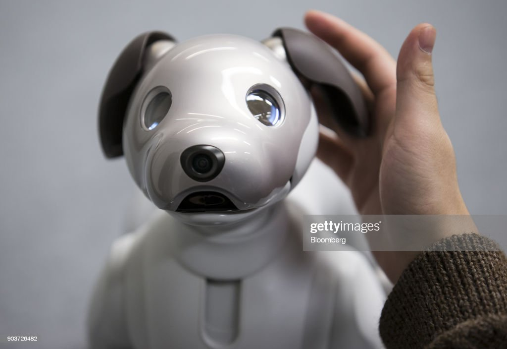 An attendee touches Sony Corp 's robotic dog 'aibo' during
