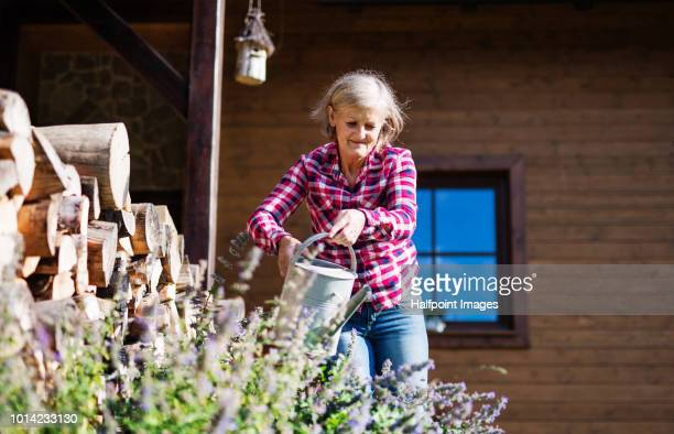 an attractive senior woman watering plants outdoors in summer. - log stock pictures, royalty-free photos & images
