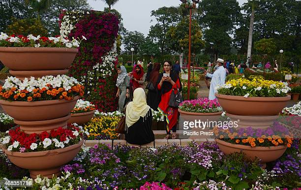 An attractive view of seasonal flowers flouring and blooming at Race Course during flowers exhibition organized by Parks and Horticulture Authority...