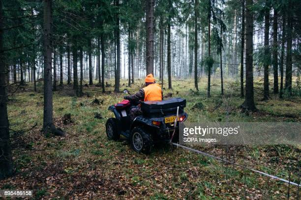 An ATV is used to tow the moose to a more accessible location where it will be loaded on a truck and transported to the community slaughterhouse...