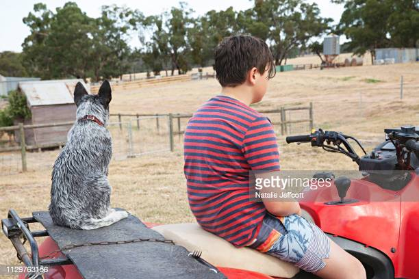 an australian blue heeler working cattle dog on a quad bike at a farm with his young owner - australian cattle dog stock pictures, royalty-free photos & images