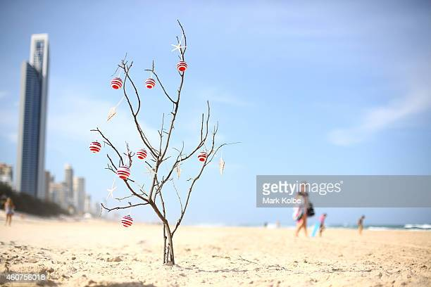 An Australian Christmas tree on one of the iconic beaches of the Gold Coast Queensland Queensland's beaches rank amongst the best in the world and...
