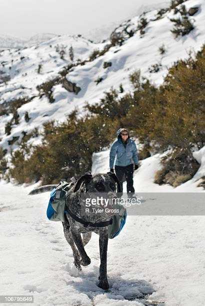 An Australian Shepard Mix, named Smokey, and a young woman trek up a snowy path.