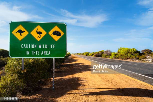 an australian wildlife sign, depicting a kangaroo, an emu and an echidna, situated next to the indian ocean road in western australia, australia. - mammal stock pictures, royalty-free photos & images