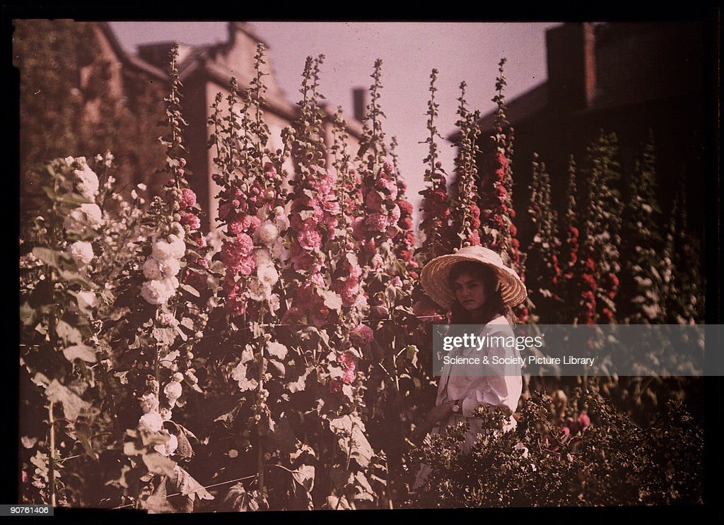 Girl in a garden with hollyhocks, 1908. : Photo d'actualité