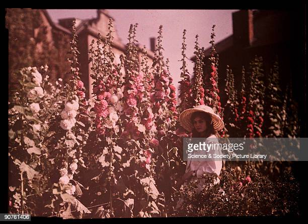An autochrome of her daughter wearing a sun bonnet taken by Etheldreda Janet Laing Hollyhocks tower over the young girl as she stands in the sunny...