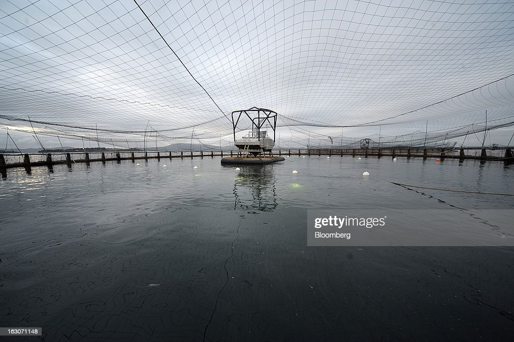 An automatic feeder sprays pellets within a salmon pen at Huon Aquaculture Co.'s salmon farm at Hideaway Bay, Tasmania, Australia, on Tuesday, Feb. 26., 2013. Australia's economy probably grew 3 percent in the final quarter of 2012 from a year earlier, economists predicted before a March 6 government report, as demand strengthened from China, Australia's biggest trading partner. Photographer: Carla Gottgens/Bloomberg via Getty Images