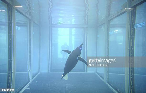 An autonomic AquaPenguin swims in a pool at the stand of the Festo company on April 19 2009 at the fair grounds in Hanover central Germany where...