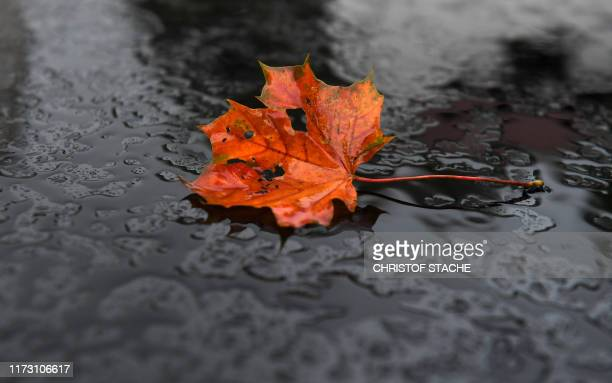 An autumn leaf lies in the rain during changeable weather near the small Bavarian village of Eichenau southern Germany on October 2 2019