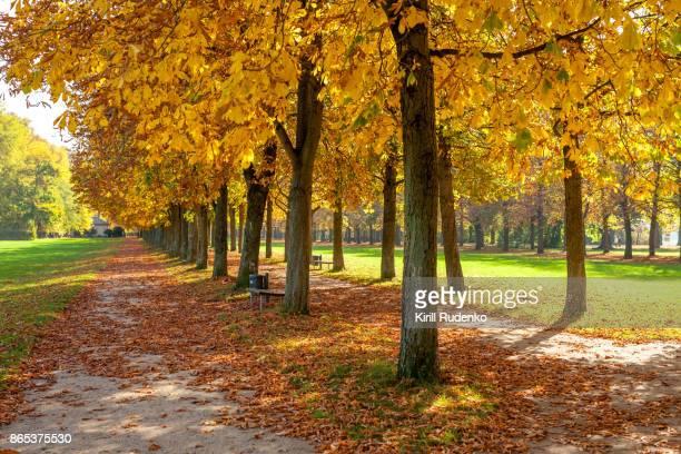 An autumn scene in Pillnitz, Saxony, Germany
