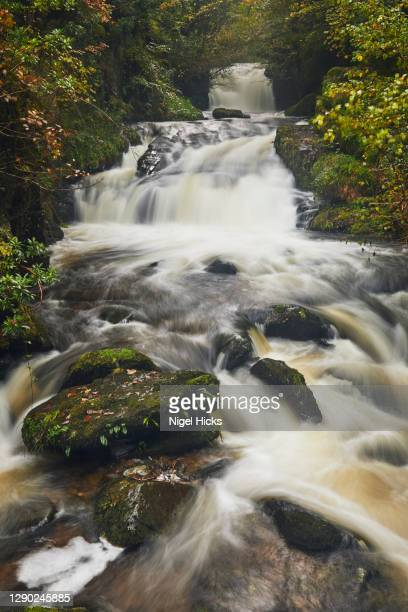 an autumn view of a fast-flowing river passing through ancient woodland in a deep valley. - exmoor national park 個照片及圖片檔