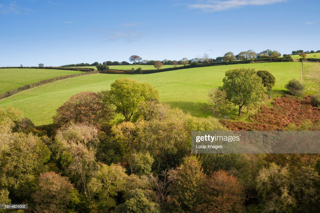 An autumnal view of a woodland on a hillside in Exmoor National Park near Porlock in Somerset : News Photo