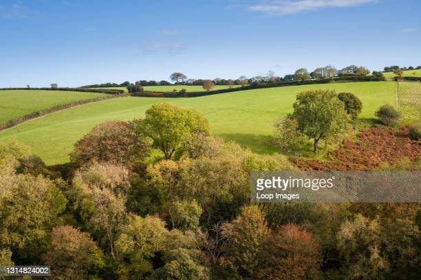 An autumnal view of a woodland on a hillside in Exmoor National Park near Porlock in Somerset.