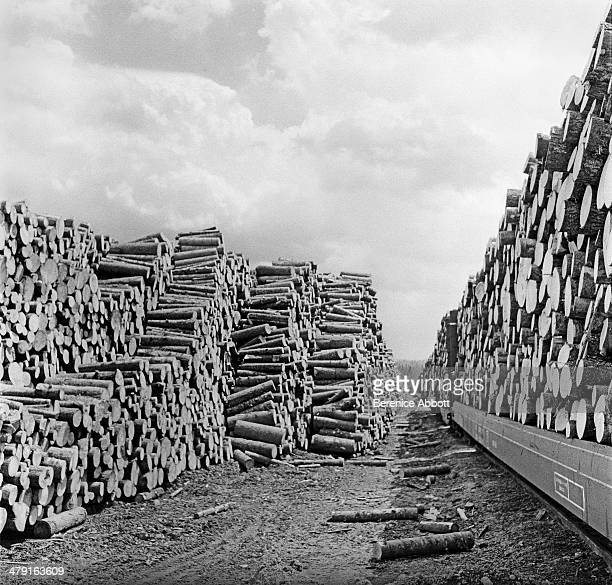 An avenue of cord wood United States circa 1950 Abbott took two series of logging photographs the first in the High Sierra Mountains in 1943 and the...