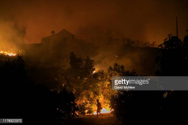 An avocado farm burns in the Maria Fire which exploded to 8000 acres on its first night on November 1 2019 near Somis California Southern California...