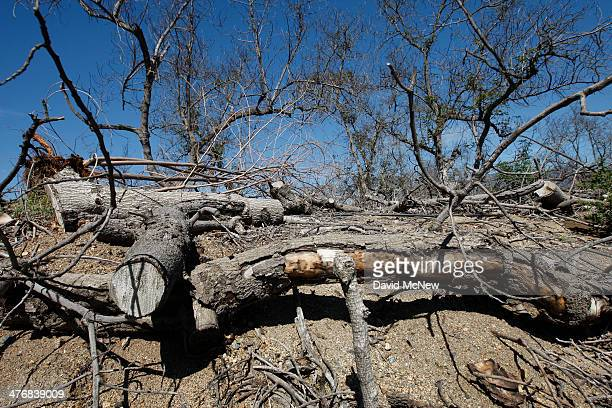 An avocado grove is left to die because of the rising cost of water on March 5 2014 near Valley Center California The Chipotle restaurant chain 2013...
