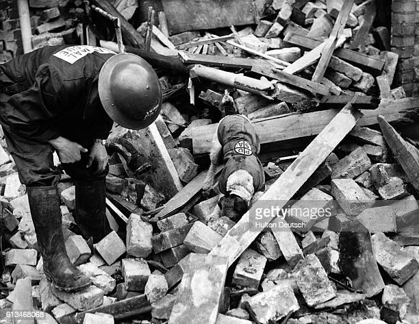 An awardwinning terrier named Beauty working for the People's Dispensary for Sick Animals searches through the rubble of a bombdamaged building for...