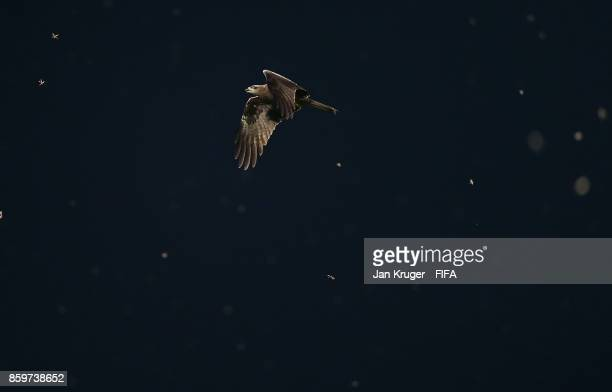 An eagle circles the ground during the FIFA U17 World Cup India 2017 group C match between Costa Rica and Guinea at Pandit Jawaharlal Nehru Stadium...