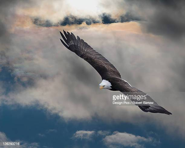 an eagle in flight rising above the storm