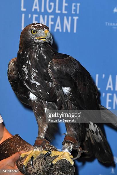 An Eagle is seen during the L'Aigle et l'enfant Paris premiere at Gaumont Capucines on June 19 2016 in Paris France