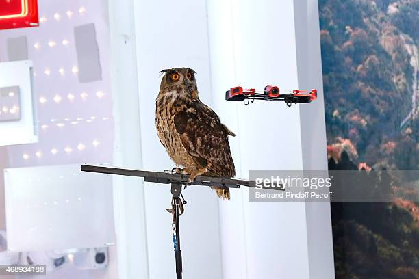 An Eagle owl fromf Tamer JeanPhilippe Varin who presents an animal documetary filmed by a drone during the 'Vivement Dimanche' French TV Show at...