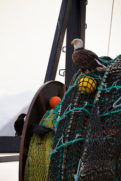 An Eagle Sits On The Fishing Nets On A Boat Wall Art