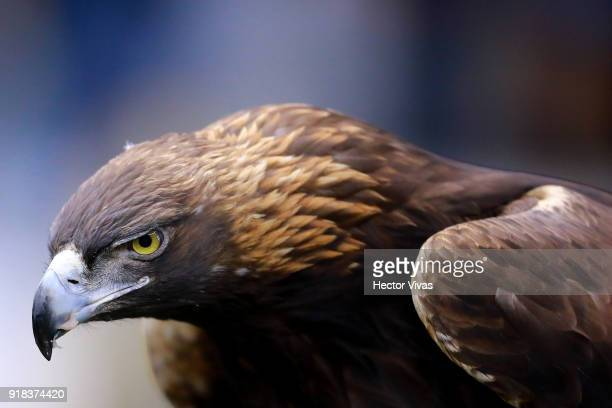 An eagle the mascot of America looks on during the 7th round match between America and Monarcas as part of the Torneo Clausura 2018 Liga MX at Azteca...