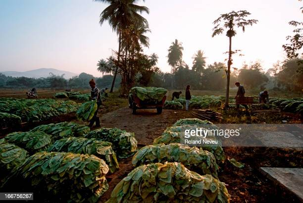 An early village market for tobacco leaves growers in the region of Mae Hong Son, Thailand..