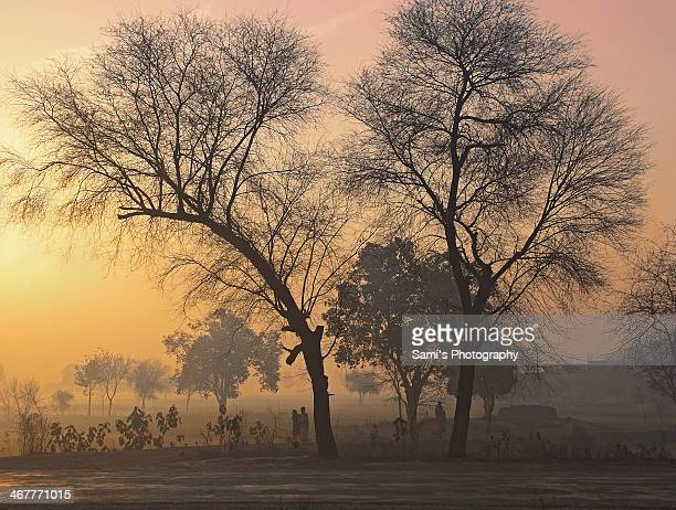 an early winter morning - punjab pakistan stock photos and pictures